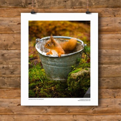 001-gunther-in-bucket.jpg
