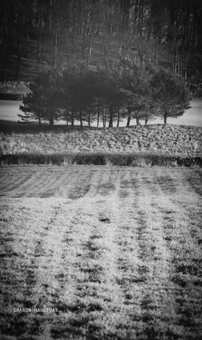 20141229_blackford_1550.jpg