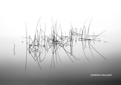reeds1.jpg