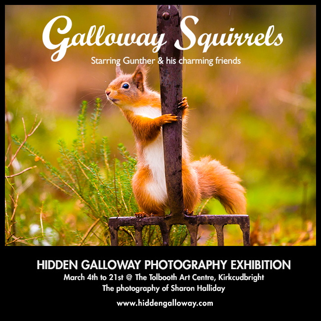 Red Squirrel photography exhibition