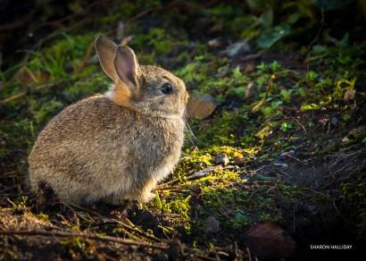 20140207_bunny_0004.jpg